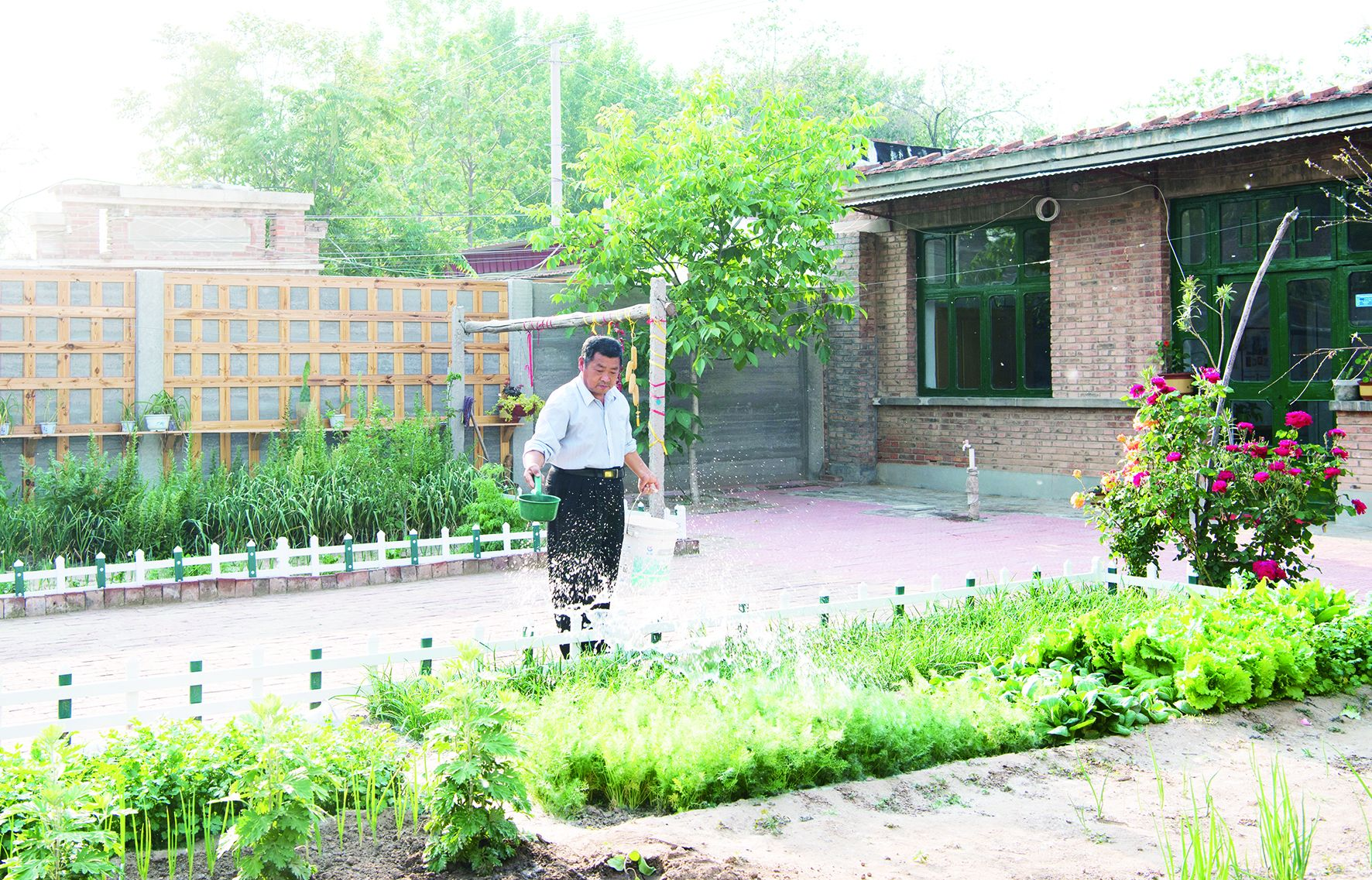 德州:美麗庭院提升村居顏值