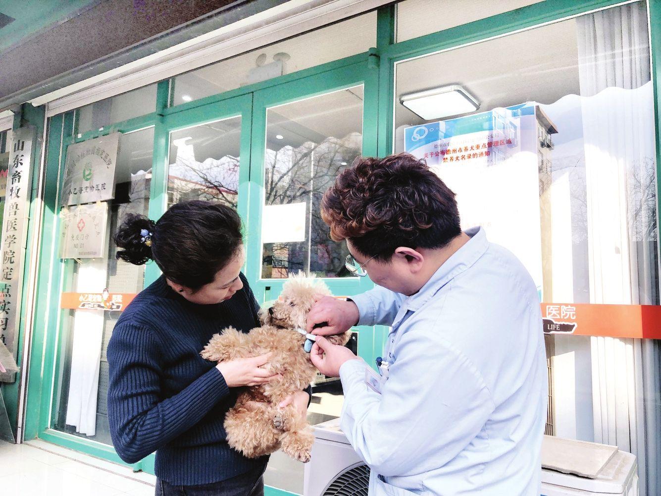 """《養犬管理條例》實施近兩個月 全市5300余犬只有了""""身份證"""""""
