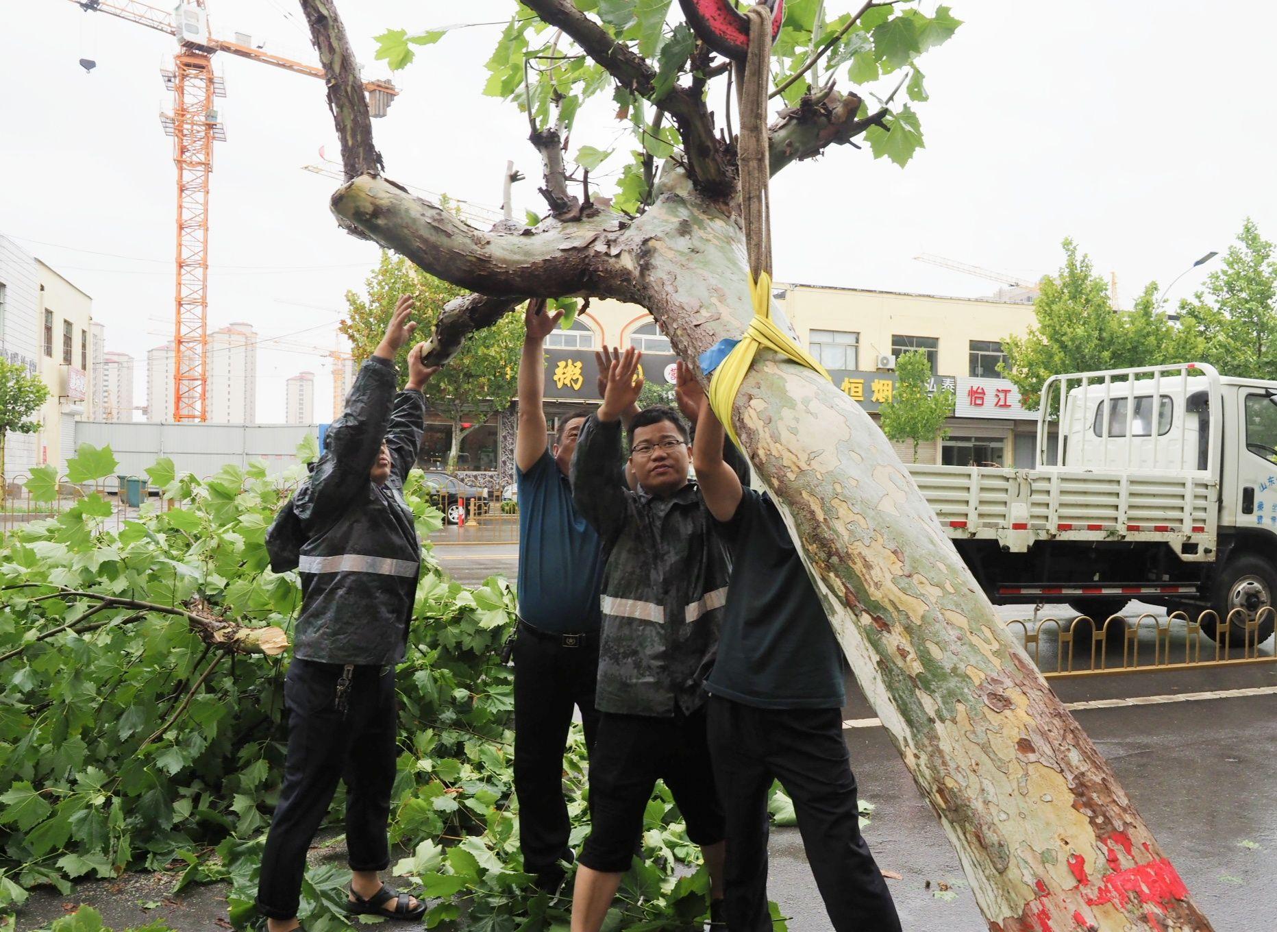 记者直击:庆云城区20余棵树木折断  县综合行政执法局工作人员连夜清理