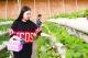 生态园果蔬香