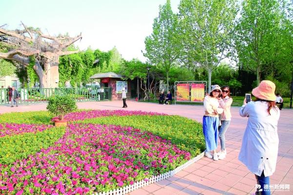 鲜花吸引了市民观赏