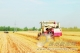 截至6月8日 德州经开区小麦机收逾三成