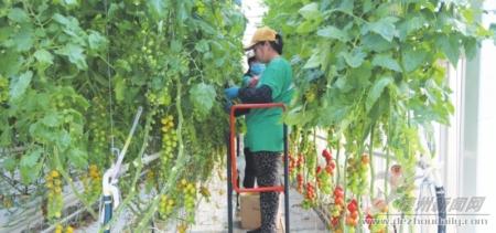 """把握两个关键点 激活全产业链——解析现代农业发展的""""临邑板块""""现象"""