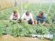 德州市农科院蔬菜所专家到宿安乡指导蔬菜种植工作