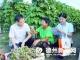 宁津农商银行走访葡萄种植园