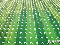 平原:丰收节奏响乡村振兴交响曲