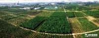 林海湿地交融绿色生态屏障