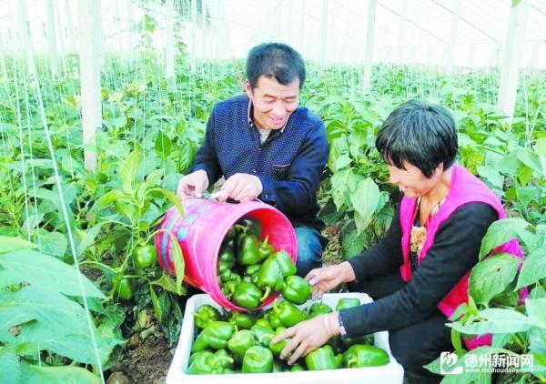 陵城楚轩生态园——优质蔬菜直供京津