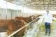 白富恒养殖场:生态养牛带民致富
