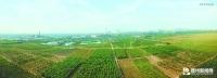betway官网:鲁西北运河畔崛起万亩生态林场