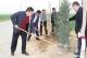 夏津郑保屯镇全年造林绿化面积1150亩