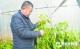 明馨果蔬盖棉被的大棚菜提前20天上市