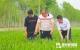 勇海家庭农场 沼液做肥料 提质又增效