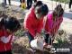 德州运河经开发区各中小学开展植树节活动