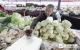 香椿新鲜上市  近期蔬菜价格高市场难寻1元菜