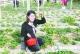 归然种植专业合作社 无公害果蔬助百余农户增收