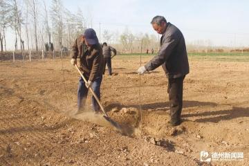 因地制宜调整农业产业结构边临镇发展特色水果种植350亩