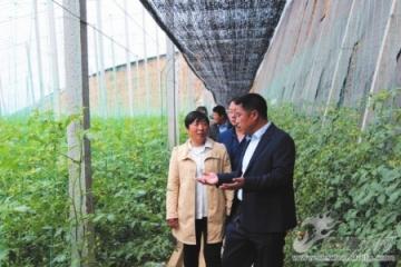 临南镇组织党员和西红柿种植代表赴寿光参观学习