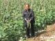 菜地摘黄瓜