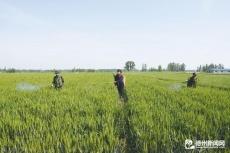 """经济开发区33552亩小麦""""一喷三防""""工作圆满完成"""
