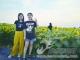 临南镇:油葵花海引来观光客