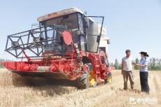betway官网市小麦已收获371万亩 占应收面积的47.2%
