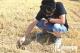 德州市达到严重干旱级别  受旱农田面积达301.7万亩