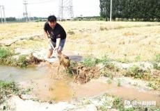 经济开发区组织干部深入一线开展抗旱夏种工作