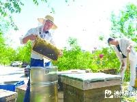 甜蜜养蜂人 家在花香处
