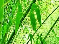 竹泉村打造乡村振兴的齐鲁样板