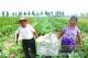滋镇引导农业合作社由单纯粮食种植向特色种植发展