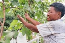 庆云:葡萄树下的美丽乡村