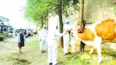 动物防疫正当时