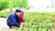 10万盆鲜花装点市容