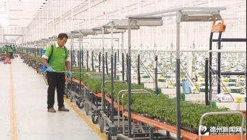 陵城区千亩级智慧农业大棚开启农业发展新时代