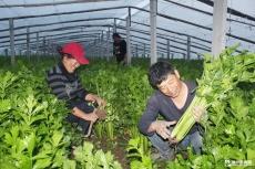 中丁乡进入产业化经营  有机蔬菜年收入20万元