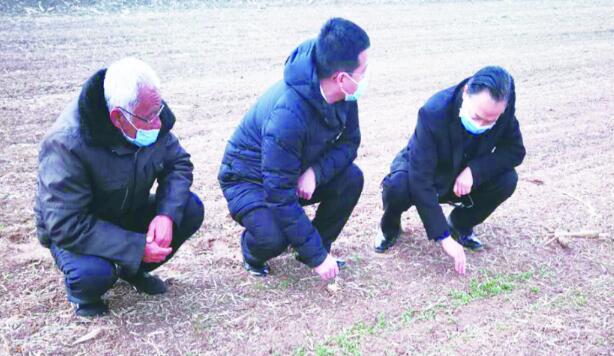 農技人員入村指導蔬菜生產