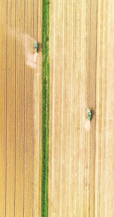 115万亩小麦开镰