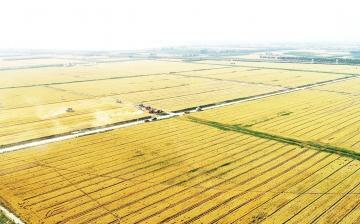 """""""三夏""""生产开始  庆云县29.26万亩农田进入麦收时节"""