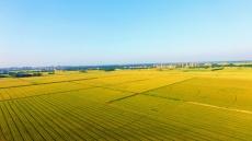 平原县小麦长势喜人 丰收在望