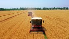 平原县麦收工作基本结束