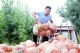 德州日報發起公益助農行動 滯銷冬瓜即將售罄