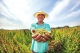 """300公顷""""超级谷物""""开镰  藜麦熟喜丰收"""