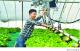 庆丰收迎小康 建设秀美乡村——全市农业农村工作综述