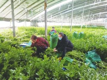 市农业农村局开展农产品质量安全宣传和随机抽检行动