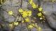 解锁春暖花开的季节  德州城区赏花攻略请收好!