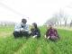 播下科技火種 服務鄉村振興——樂陵市科技小院助力現代農業發展調查