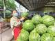 可以畅快吃瓜了  大棚西瓜抢鲜上市价格亲民
