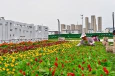 """庆云县综合行政执法局  花团锦簇迎""""双节"""""""
