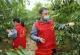 夏津县乡党政部门、社会各界帮果农渡难关 3天售出1.5万公斤滞销桃子